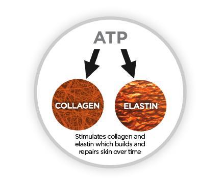 collagen picture